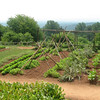 The Vegetable Garden  - Monticello