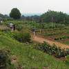 The 1000-Foot-Long Vegetable Garden