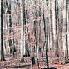 Old Growth Treasure Forest - Woods Walk - Gravesite in Woods - Montpelier Estate, Orange County, VA  1-21-01