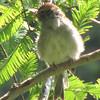 Sparrow In Garden Tree - Montpelier Restoration Celebration, Orange, VA