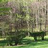 Topiary - Morven