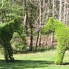 Close-up of Horses Topiary Along Driveway at Morven