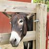 Donkey Greeting from Rosie Rou - Mountainside Petting Farm - Afton, VA  9-3-10