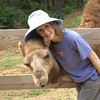 This Camel Makes Friends Instantly - Donna and Chloe Snuggling or Snuzzling - Mountainside Petting Farm - Afton, VA  9-3-10