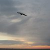 Flying Seabird at Sunset - Driving From Hampton to Norfolk  1-12-07