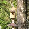 Bluebird - Occoneechee State Park - Clarksville, Virginia