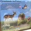 Signage: Grasslands Are Alive - Occoquan Bay NWR