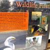 Signage: Wildlife First - Occoquan Bay NWR