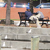 Seagulls and Duck with a Muffin for Breakfast - Historic Seaport, Portsmouth, VA  4-10-11