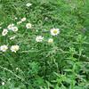 Dense Vegetation with Diversity of Plants - Rapidan Camp or Herbert Hoover's Camp - Shenandoah Nat'l Park  6-10-10