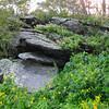 Sedum in Bloom on Rocks - Skyline Drive - Shenandoah National Park, Virginia