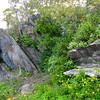 Rocks and Plants - Skyline Drive - Shenandoah National Park, Virginia