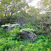 Trees, Rocks and Wildflowers - Skyline Drive - Shenandoah National Park, Virginia<br /> Wild Life of Plants and Rocks