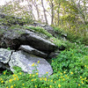 Rocks and Wildflowers - Skyline Drive - Shenandoah National Park, Virginia
