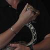 Cornelius, Corn Snake from The Wildlife Center - Beautiful Pattern and Colors  - Presented at Carysbrook, Palmyra, VA