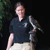 Kettler, the Broad-winged Hawk  - Presented at Carysbrook, Palmyra, VA