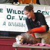 Natty, a Virginia Opossum  - Presented at Carysbrook, Palmyra, VA