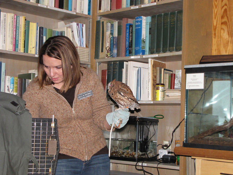 Kelly Matherly Introduces Us to Pignoli, Screech Owl {Megascops asio] Who Came to The Wildlife Center in Oct. 2003 - Lyndhurst, VA  10-18-09