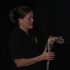 Cornelius, the Corn Snake, a Constrictor Type of Snake  - Presented at Carysbrook, Palmyra, VA