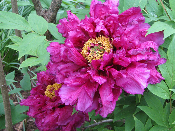 Charlottesville, VA - University of Virginia Homes - Open For Garden Week