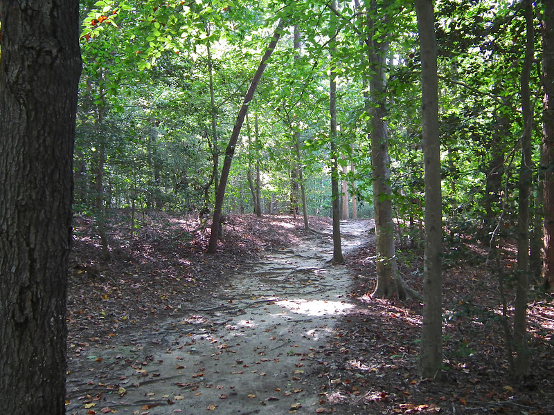Trail Still Sandy - Waller Mill Park - Williamsburg, VA<br /> Interesting that there is so much sand in this area.