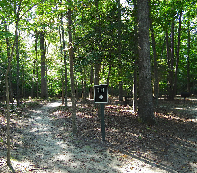 On The Bayberry Trail - Waller Mill Park - Williamsburg, VA