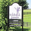 Entrance to White Oak Lavender Farm - Harrisonburg, VA  7-2-11