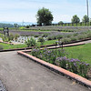View of the Lavender Fields and Gift Shop Corner - White Oak Lavender Farm - Harrisonburg, VA  7-2-11