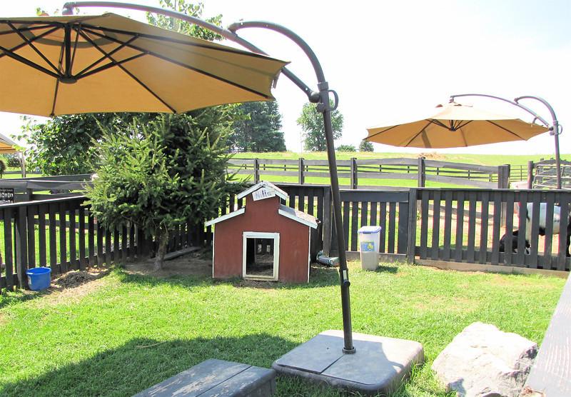 Barnyard Animals Living in Luxury - White Oak Lavender Farm - Harrisonburg, VA  7-2-11
