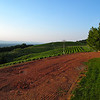 Vineyard Area of Carter Mountain's Orchards - The Wildlife Center Benefit at Carter Mountain Orchard, Charlottesville, VA  6-9-12