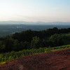 View of the Blue Ridge Mountains and Charlottesville Before Them - The Wildlife Center Benefit at Carter Mountain Orchard, Charlottesville, VA  6-9-12<br /> Also noticeable are some of the vineyards at Carter Mountain Orchards.