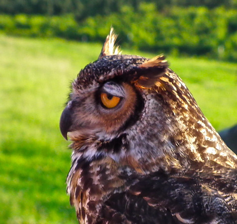 Charlottesville, VA - The Wildlife Center Event at Carter Mt. Orchards