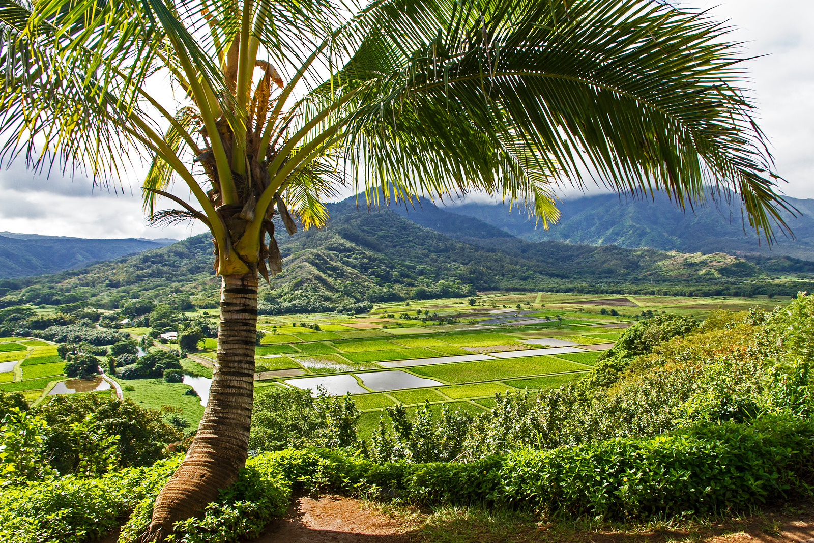 The Hanalei Valley