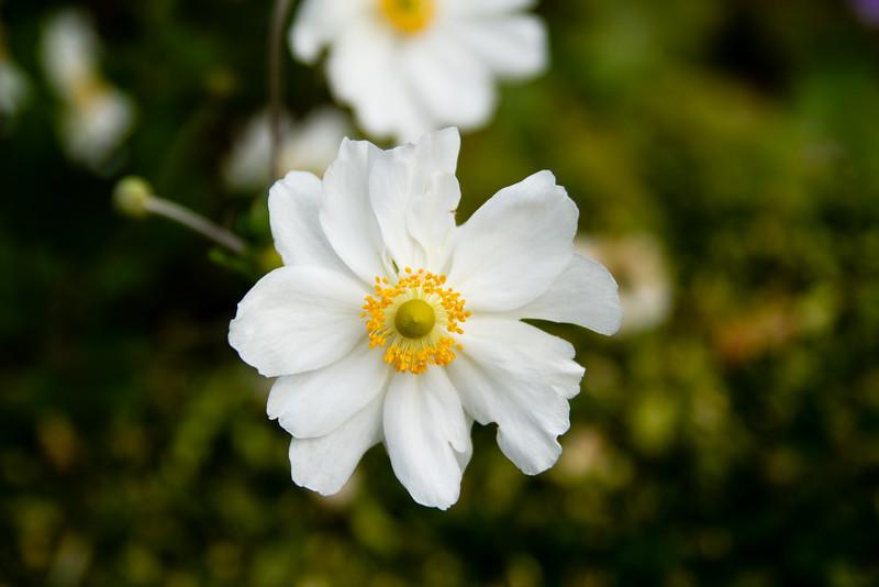 Bloom in the garden