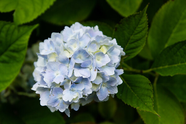 Blooms in the garden