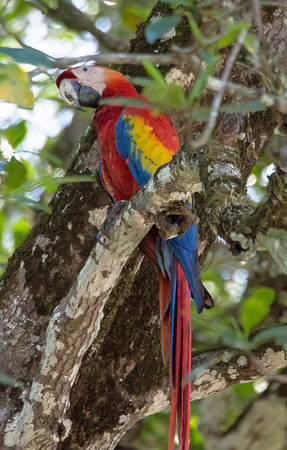 Visit to Costa Rica - Feb 2014