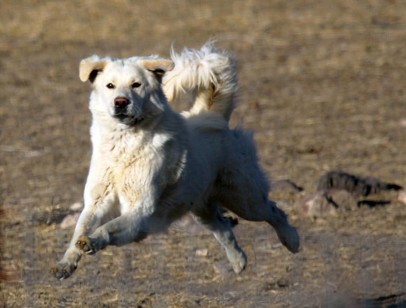 A Marfa Dog runs out to greet us.