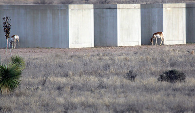 Antelope hang around Ft. Russell on the outskirts of Marfa.