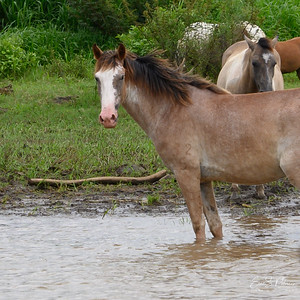 We passed a heard of horses at the waters edge.