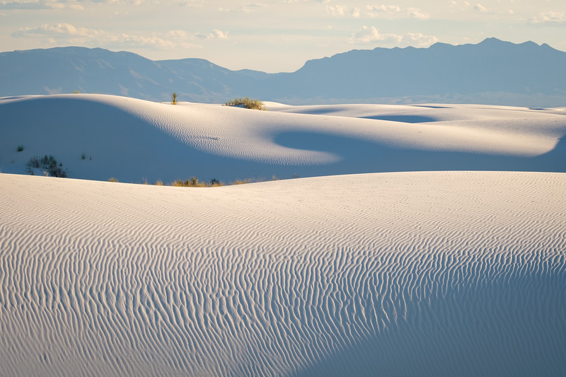 THE DUNES BATHED IN LATE AFTERNOON LIGHT