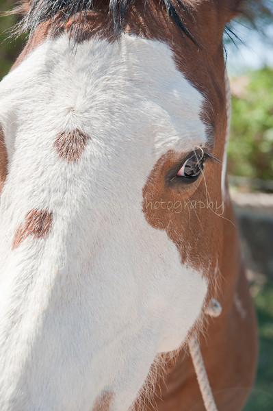 28Filomero Rodriguez & horse Pinta_El RitoNM_May 2011_008 copy