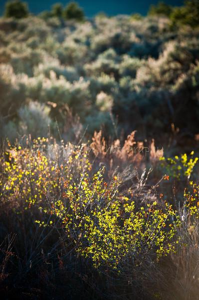51Plants_High desert_Taos  NM_May 2011_015 copy