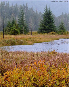 """FALL 2009"",Pats Lake,Wrangell,Alaska,USA."