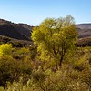 Cottonwood trees showing a little fall color as we drive into Fort Davis