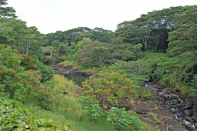 Lush Rain Forest around Hilo