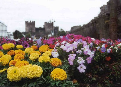 conwy-flowers