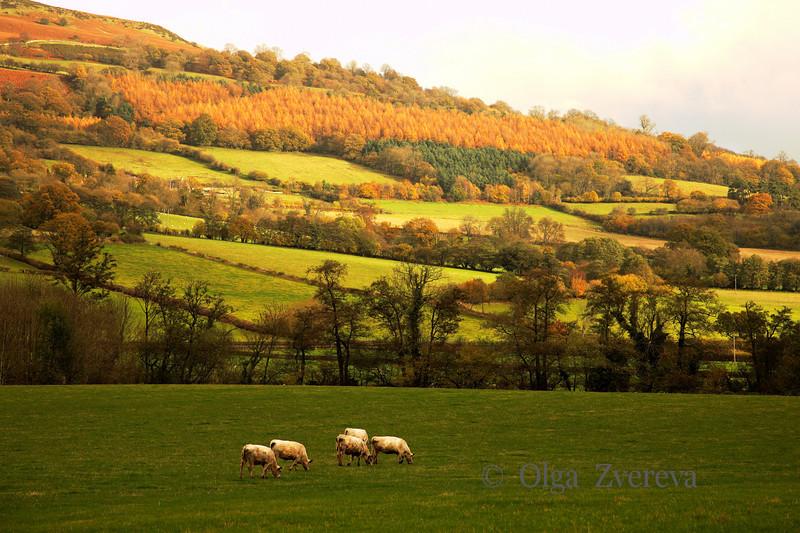 <p>Farm land at Wales, UK</p>