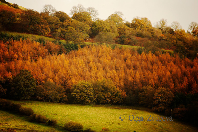 <p>Autumn in Wales, UK</p>