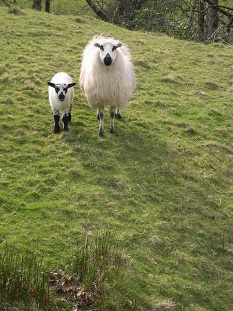 Snowdonia 2008