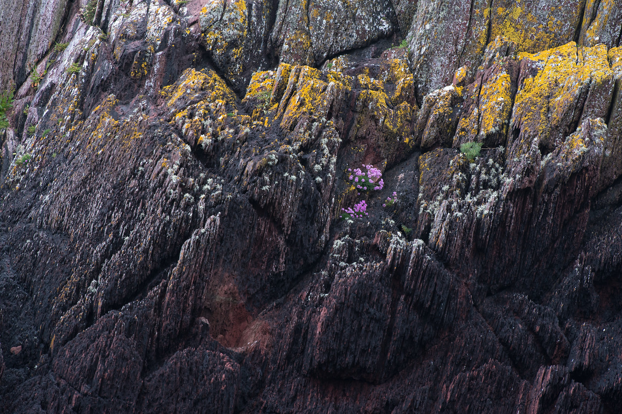 Sandstone with Lichen, Algae and wild flowers